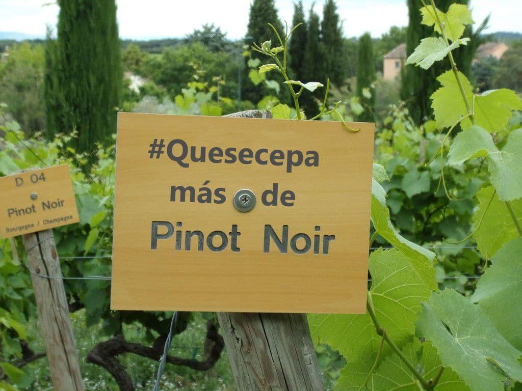 #Quesecepa más de Pinot Noir 1