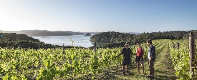 Nueva Zelanda celebra 200 años como productor de vino