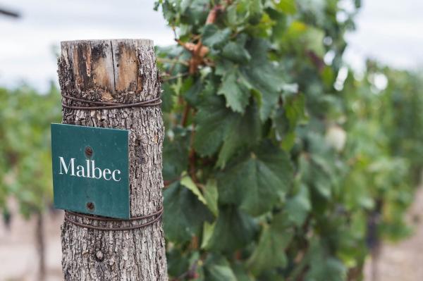 Malbec 4x4 - 8 Malbec Recomendados para celebrar el Día del Malbec 5