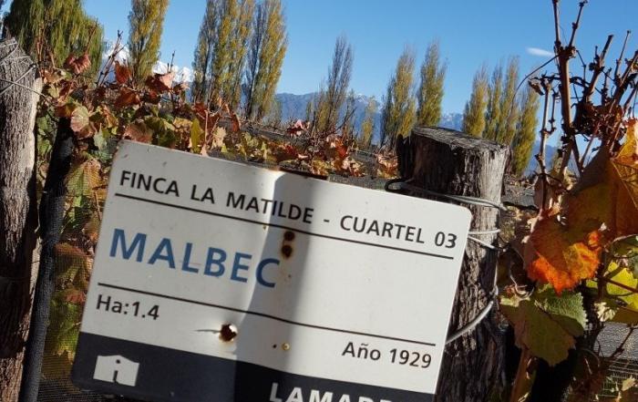 Malbec 4x4 - 8 Malbec Recomendados para celebrar el Día del Malbec (3)