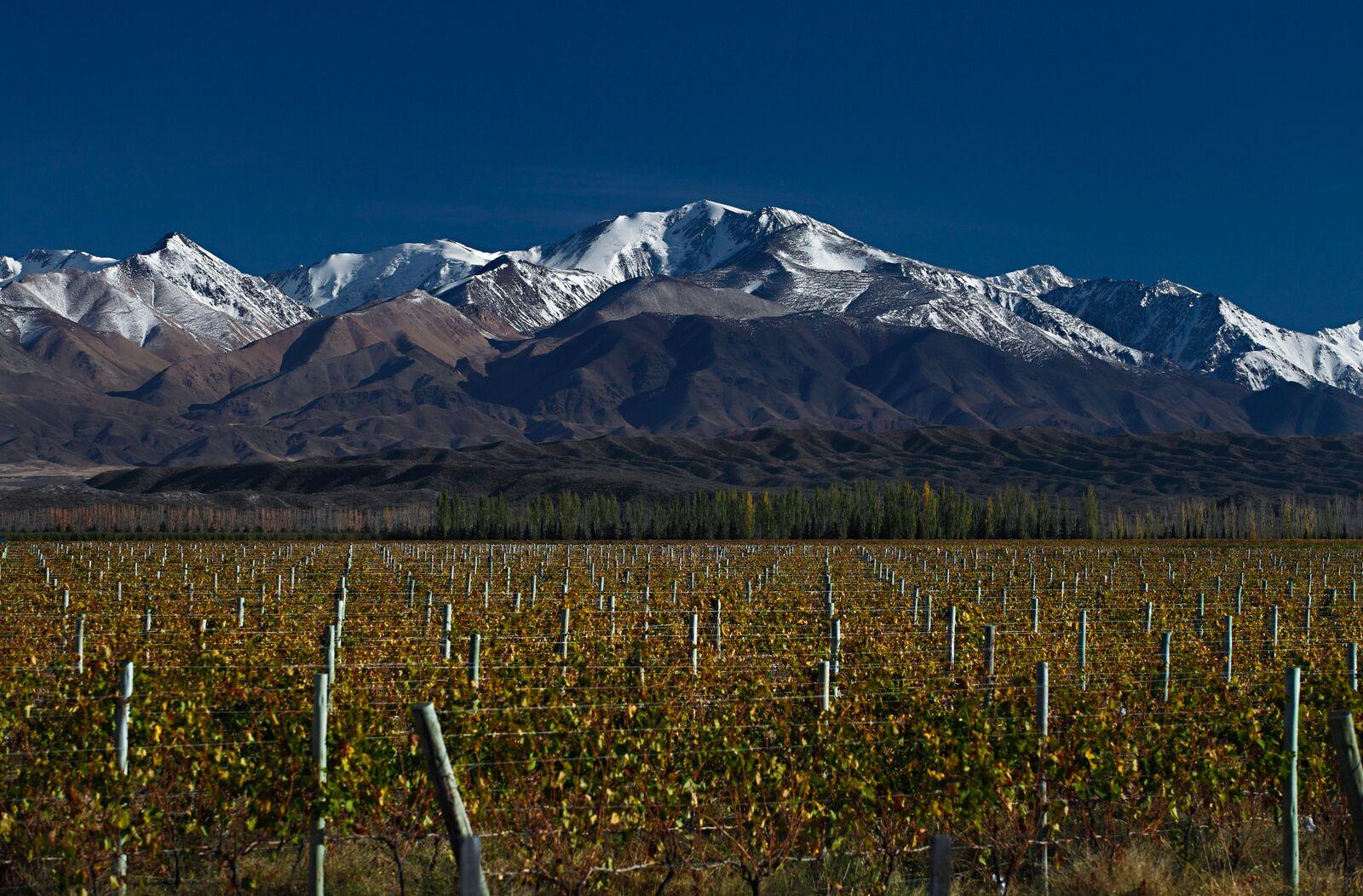 Desde un enfoque digital, Wines of Argentina profundiza el posicionamiento mundial del Vino Argentino