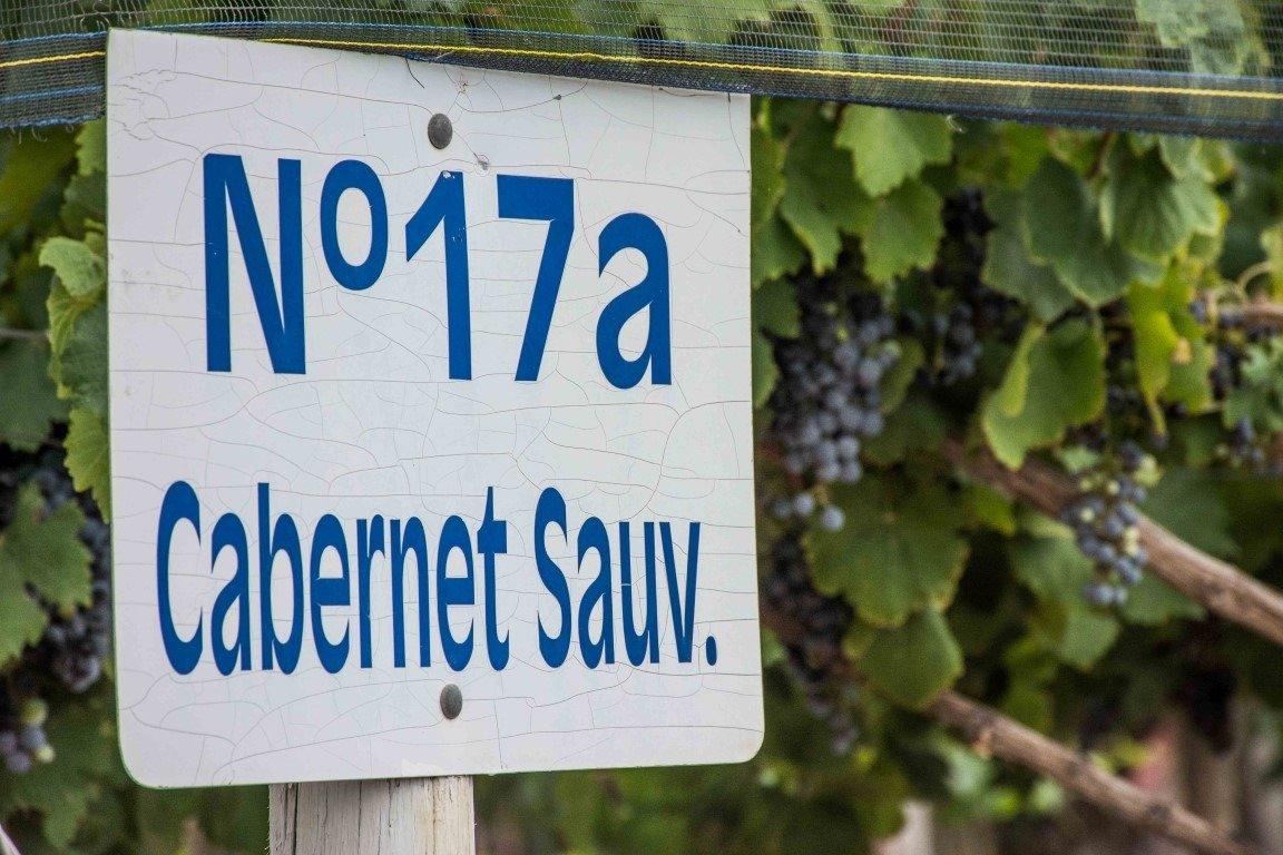 Corbeau Wines lanza su Mad Bird Cabernet Sauvignon 2018 (1)