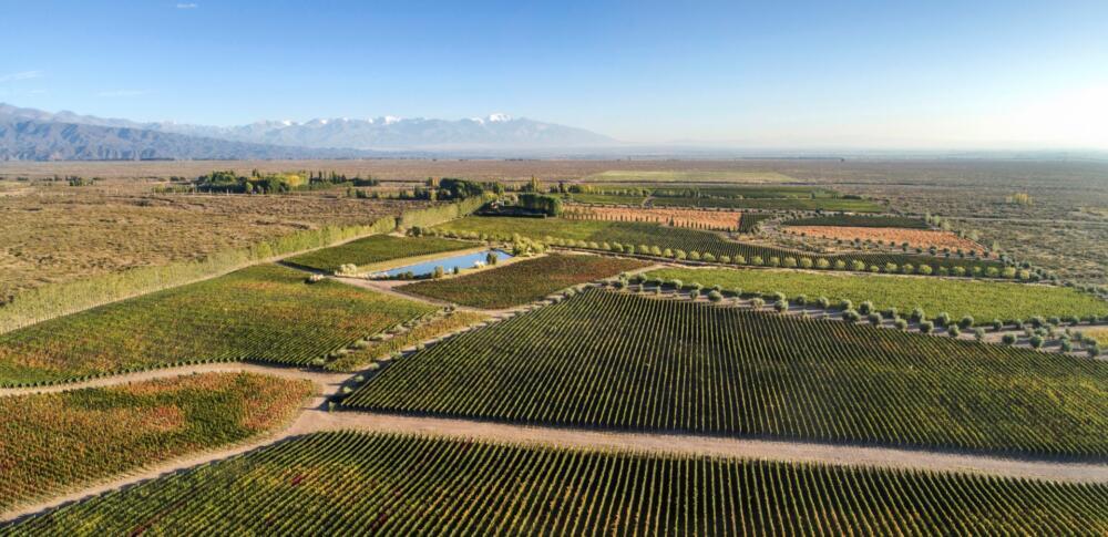 Terrazas de los Andes Grand presentó la cosecha (1)