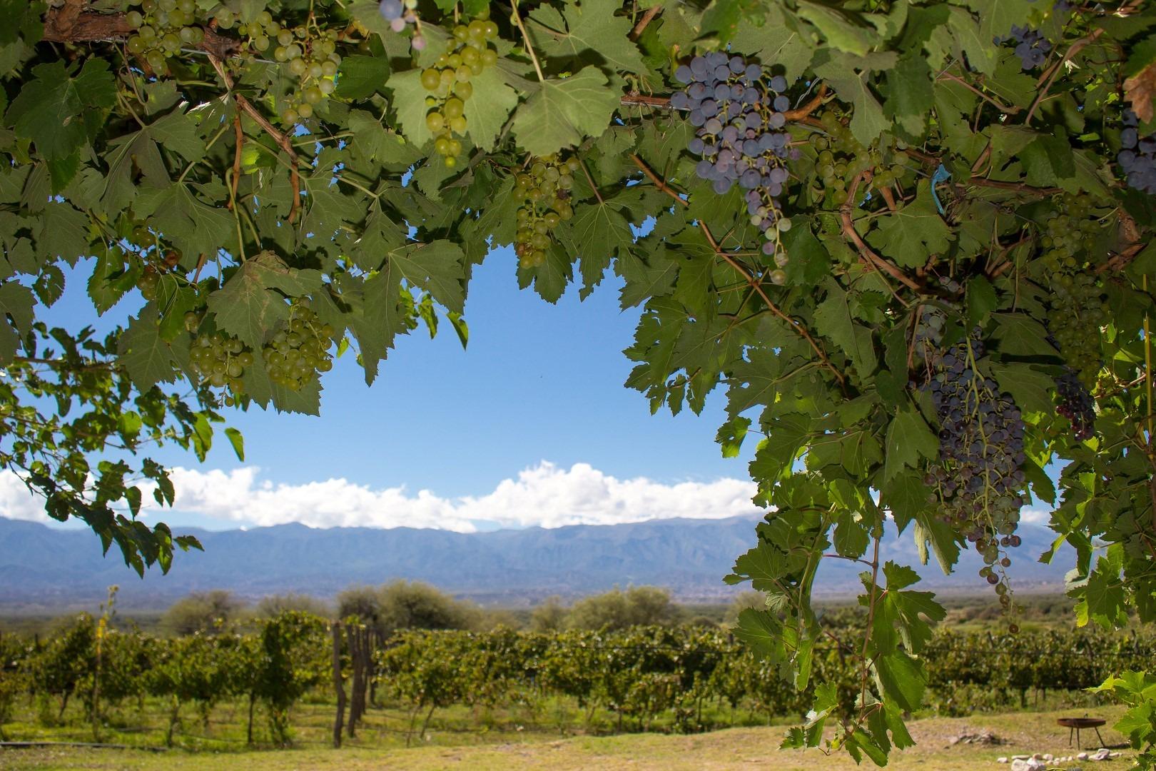 La Ruta del Vino Tucumano