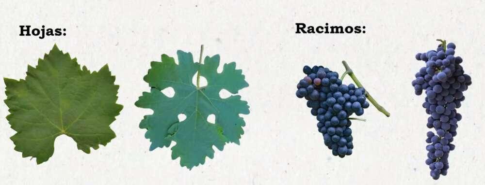 Día del Cabernet Sauvignon 2021- 7 vinos recomendados por las Bodegas